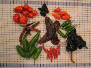 Chilies used in Nine Circles of Hell Chili Photo by DT Krippene