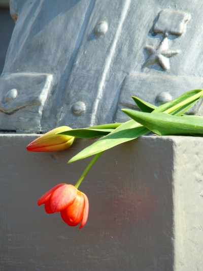 two tulips and bust