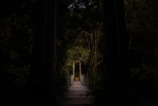 unsplash antonio-ron-darkened path 3