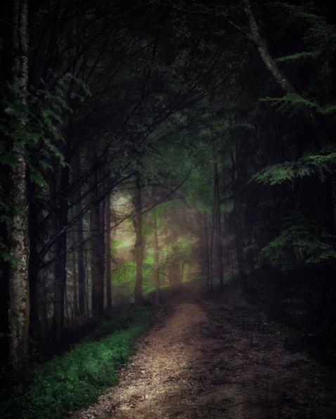 unsplash simon-matzinger-darkened path