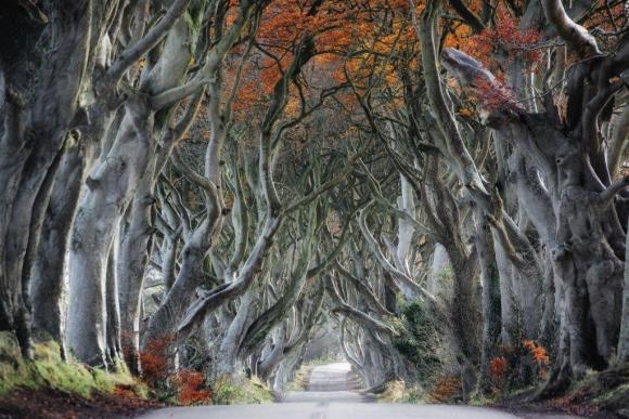 unsplash trevor-cole-road with trees