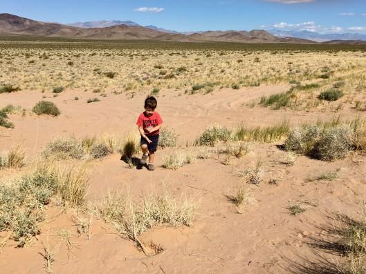 Desert Teddy